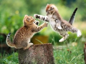 funny-cat-wallpapers-7